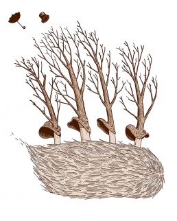 Aleix Abellanet trees Illustration